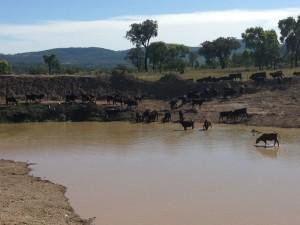 Inspecting the dam