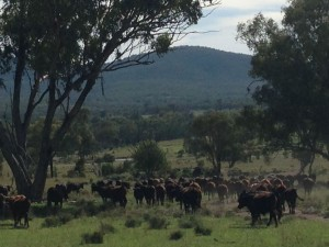 Mustering