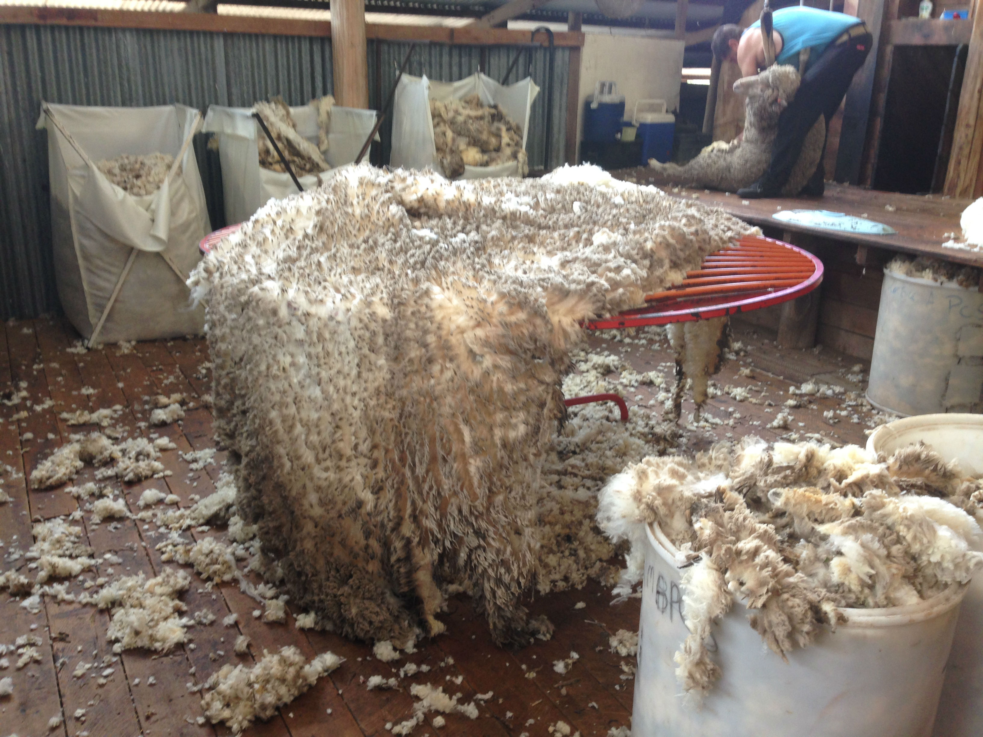 How NOT to throw a fleece